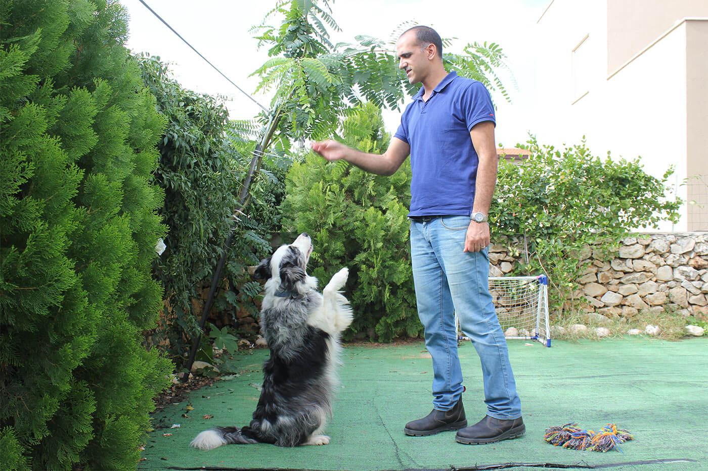 למידת כלבים איכותית